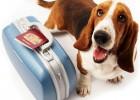 Cuidados de las mascotas en vacaciones